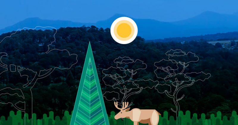 80 hectáreas de bosque en riesgo: lo que cosecha un país que siembra impunidad
