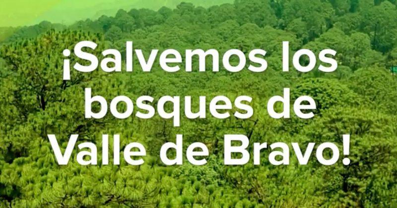 ¡Salvemos 80 hectáreas de bosque en Valle de Bravo!