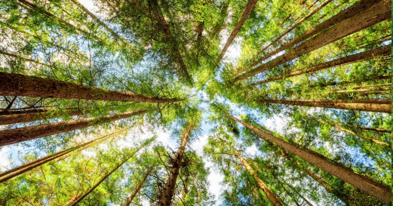 Municipio de Valle de Bravo impugna sentencia que resguarda área natural protegida