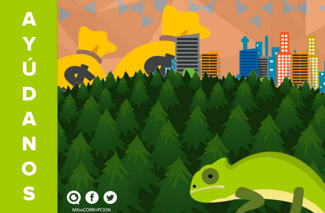 ¡Ayúdanos a detener este ecocidio en Jilotzingo!