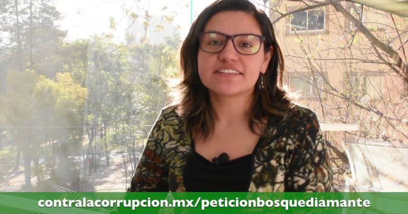 Juez de Distrito ordena la suspensión de tala en Jilotzingo