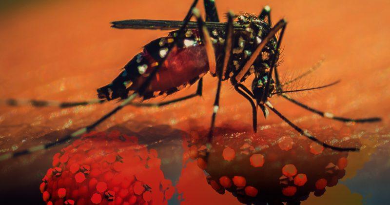 Jalisco confirma que gobierno federal no adquirió insecticida para prevenir dengue