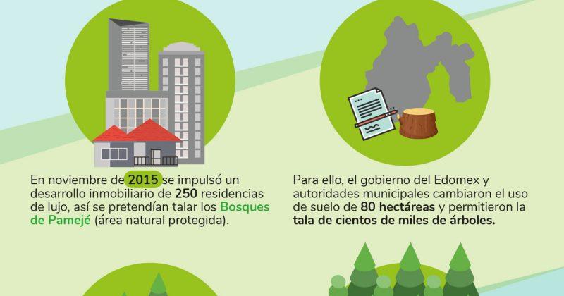 MCCI y vecinos detienen la tala de 80 hectáreas de bosque de Valle de Bravo