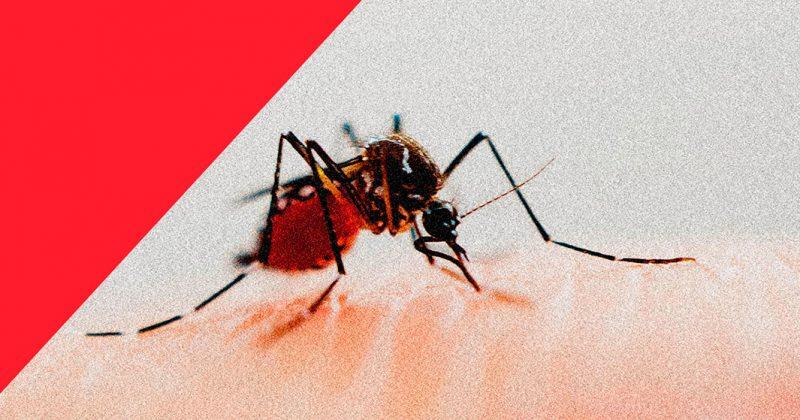 El gobierno federal dejó de comprar insecticida contra el dengue y subió la incidencia