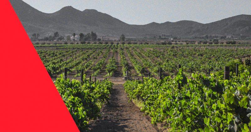 Denuncian reticencia de Cabildo de Ensenada a normar explotación desmedida de Valle de Guadalupe