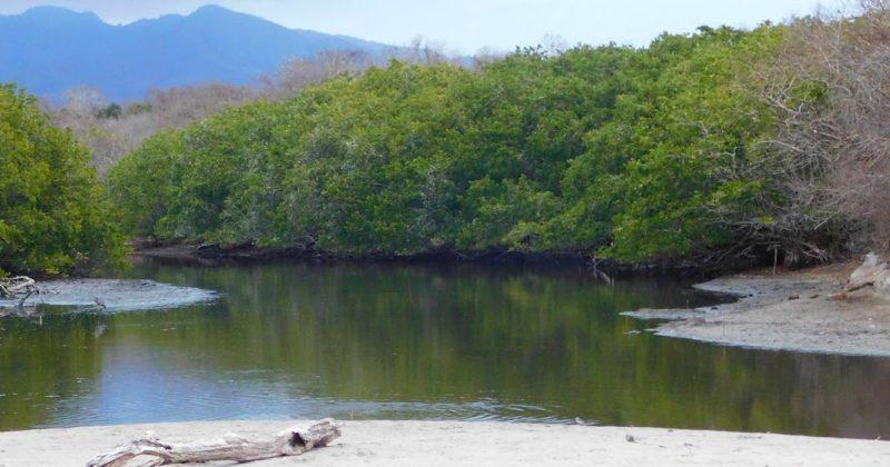 Semarnat cancela concesión de manglar a empresa privada en Punta Mita